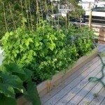 Come fare soldi coltivando piante in casa