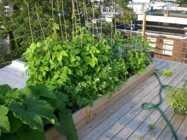 Come fare soldi coltivando piante in casa guadagnare con for Piante in casa