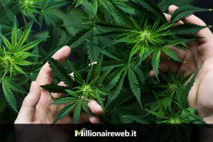 Investire in Cannabis con il Trading
